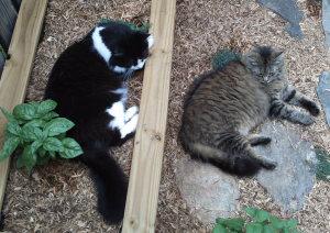 kitties-in-yard-napping-2008 007